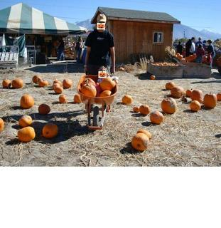pumpkinpatch1.JPG