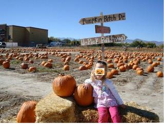pumpkinpatch2.JPG